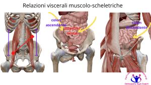 simonetta-alibrandi-osteopata-posturologo-personal-trainer-mal-di-schiena-rimedi-sintomi-esercizi-psoas-diaframma-Relazioni-viscerali-muscolo-scheletriche