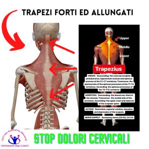 simonetta-alibrandi-osteopata-posturologo-personal-trainer-esercizi-efficaci-cervicalgia-sbandamenti-vertigini-disturbi-vista-dolore-cervicaleTrapezi-forti-ed-allungati