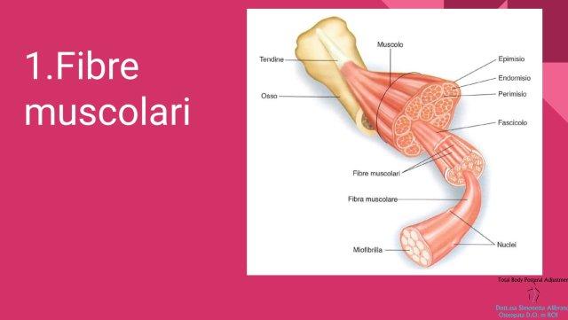 Simonetta-Alibrandi-Osteopata-personal-trainer-posturologo-total-body-postural-Adjustment-tessuto-connettivo-muscoli-esercizi-posturali-Mezieres