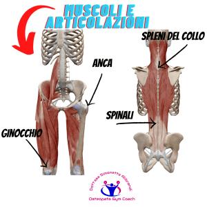 simonetta-alibrandi-osteopata-personal-trainer-postura-corretta-esercizi-Muscoli-e-articolazioni mal di schiena
