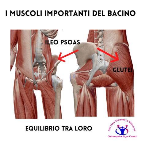 simonetta-alibrandi-osteopata-posturologo-personal-trainer-roma-psoas-glutei-esercizi-muscoli-importanti-del-bacino-total body postural adjustment