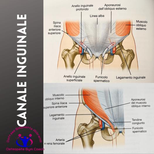simonetta-alibrandi-osteopata-massotrapista-pubalgia-esercizi-rimedi-posture-mezieres-dolore-canale-inguinale