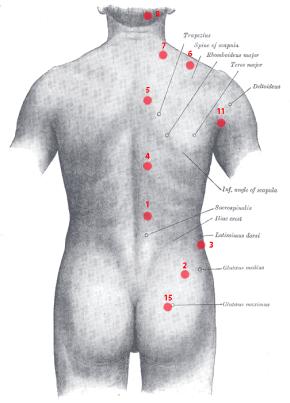 point de Knap du dos - Ostéopathe Castres