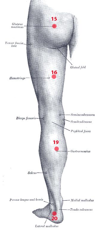 Points de Knap du membre inférieur - Ostéopathe Catsres