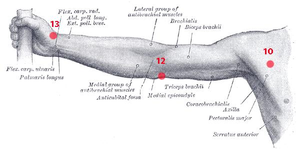Points de Knap du bras - Ostéopathe Castres