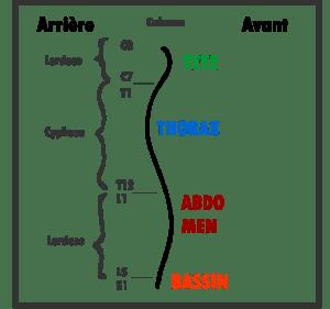 Lordose et cyphose de la colonne
