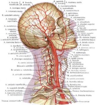 migraine-osteopathie