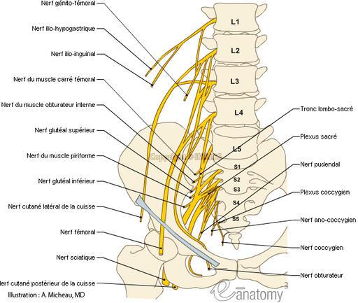sciatique ostéopathie julien moreno ostéopathe montpellier