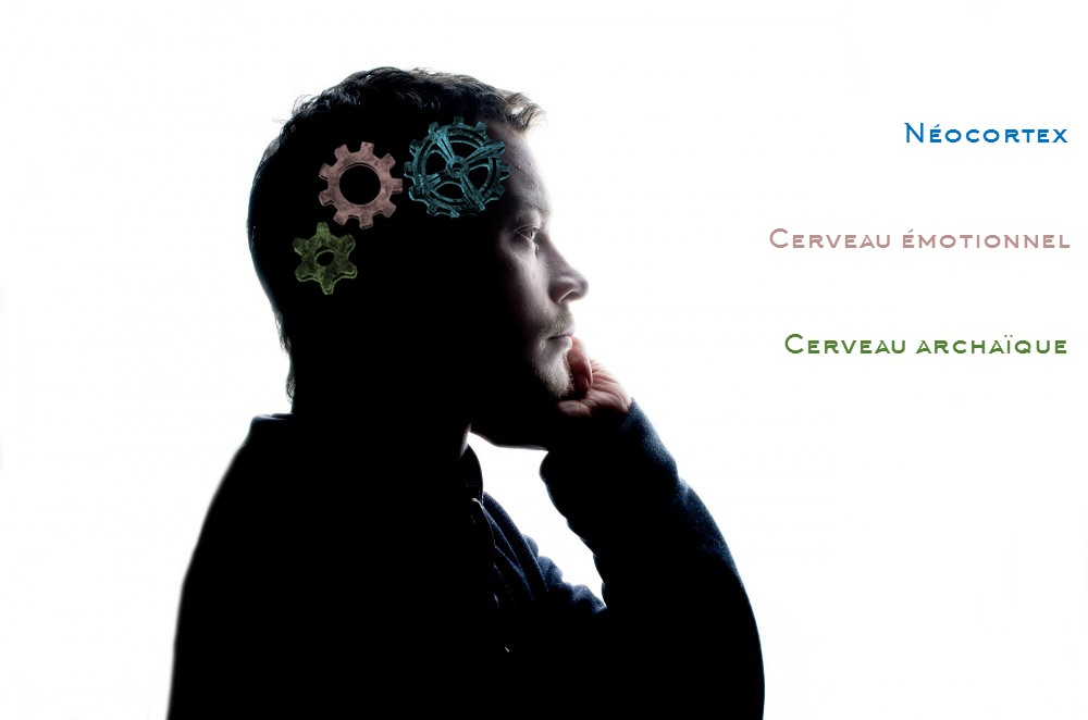 Schématisation des 3 cerveaux chez l'homme (archaïque, émotionnel et néocortex) par des engrenages dans une silhouette d'homme. Cela illustre une idée du livre de Catherine Gueguen, Pour une enfance heureuse. Cabinet d'ostéopathes de Romagnat Clermont-Ferrand.