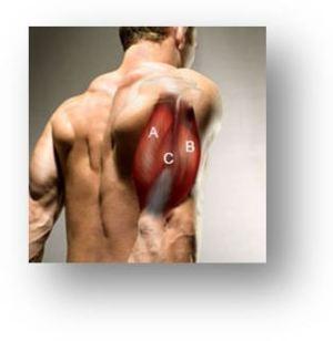Tests isométriques des muscles de l'épaule | OSTEO 74