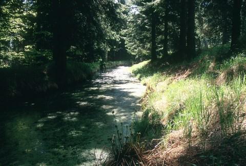 Floßgraben bei Cämmerswalde