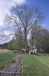 Kunstgraben an der Heidemühle (naturkundliche Wanderung der Grünen Liga Osterzgebirge 2014)