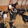 Lykkelunds geder