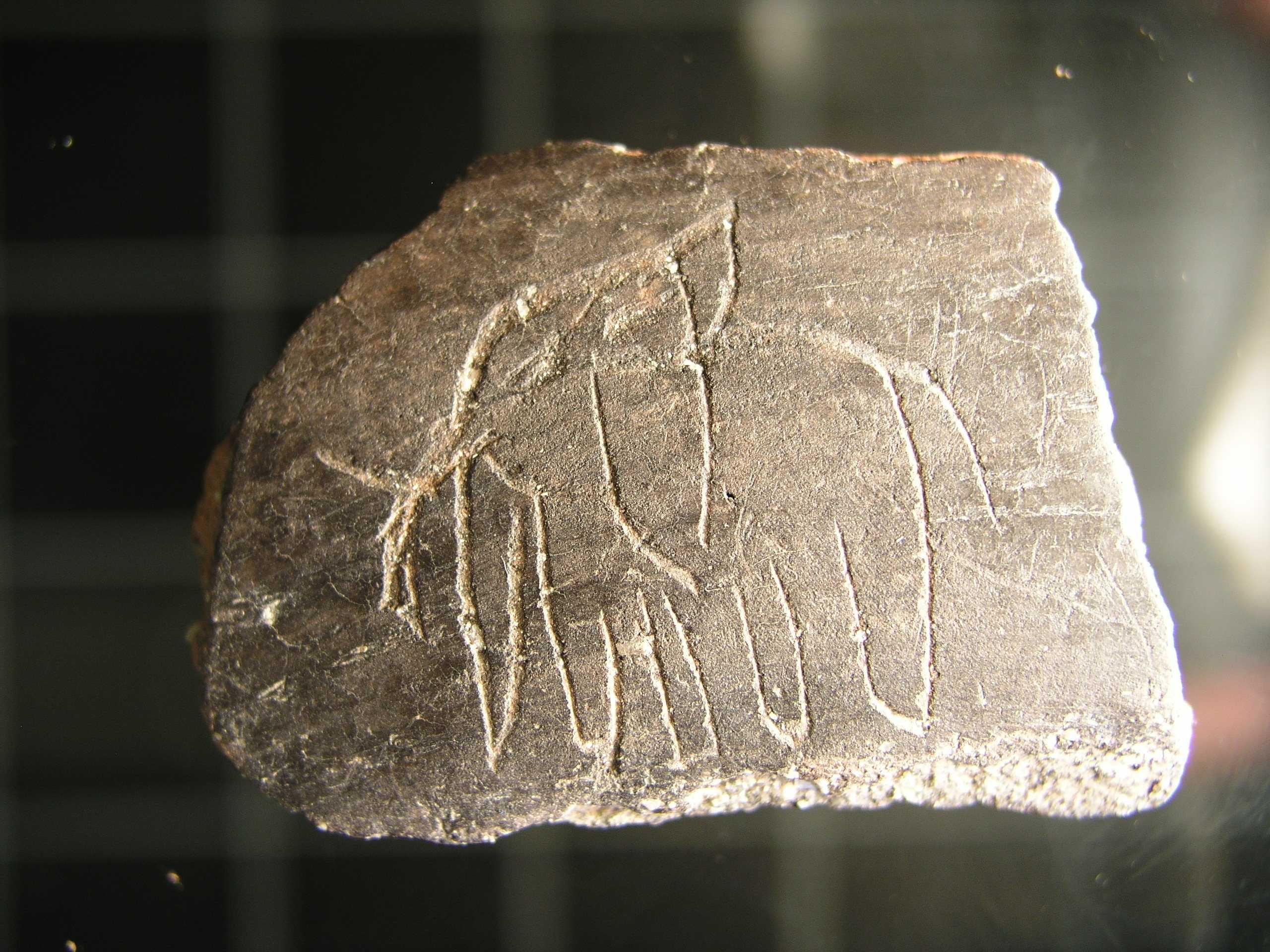 Elefantea 1700 urte  Iruña Veleia