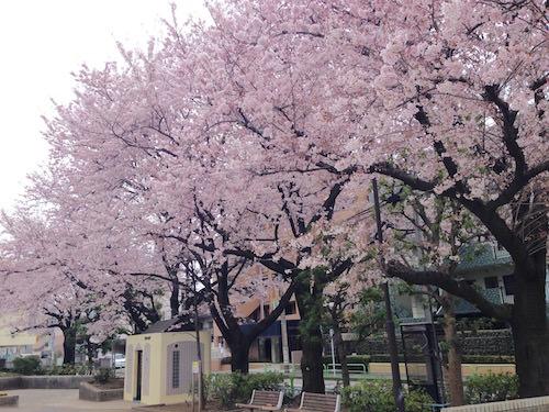 練馬区中村南公園