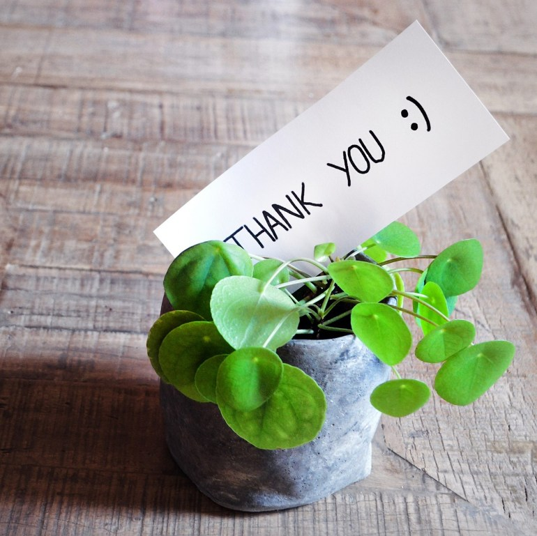 Plant in small pot with a hand written piece of paper that says 'Thank you'.