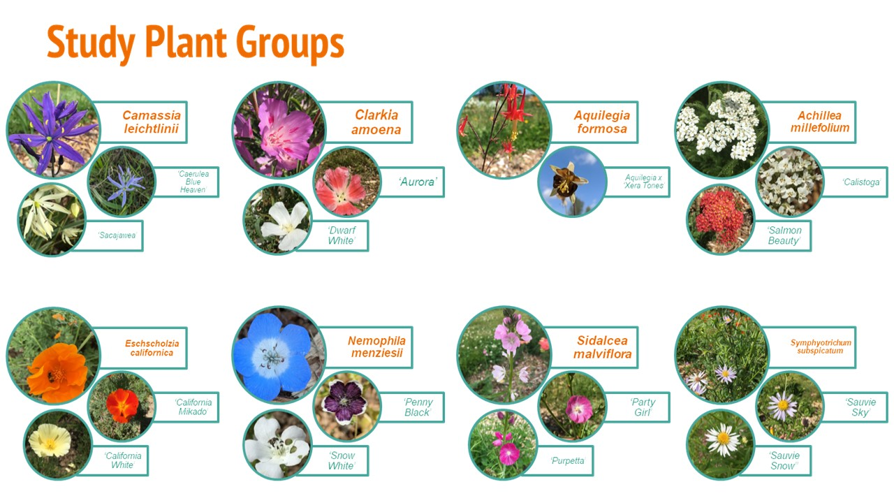 Garden Ecology Lab Year in Review: COVID Edition