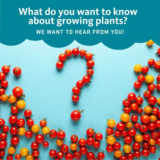 The words 'What do you want to know about growing plants? We want to hear from you.' is above a bunch of cherry tomatoes, on a blue background. Several of the tomatoes are arranged in the form of a question mark.