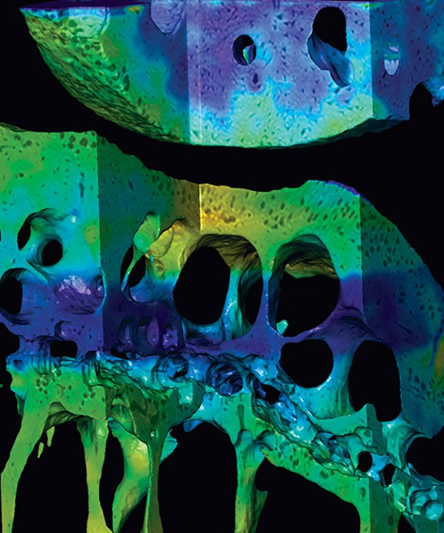 high-resolution synchrotron imaging of mouse knee joints