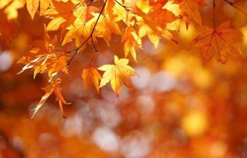 小春日和とはいつの時期?季語や季節は?英語で言うと?子供への伝え方は?
