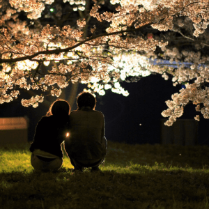 桜,カップル