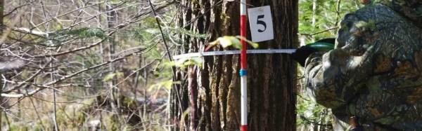 Натурная таксация леса услуги и цены
