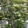 庭木のおすすめ