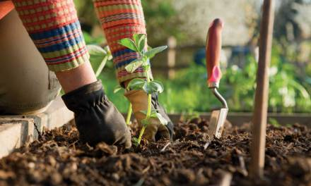 Gardening is therapeutic for all