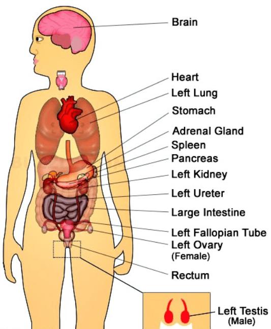 Duele la vértebra en el departamento de pecho de la columna vertebral