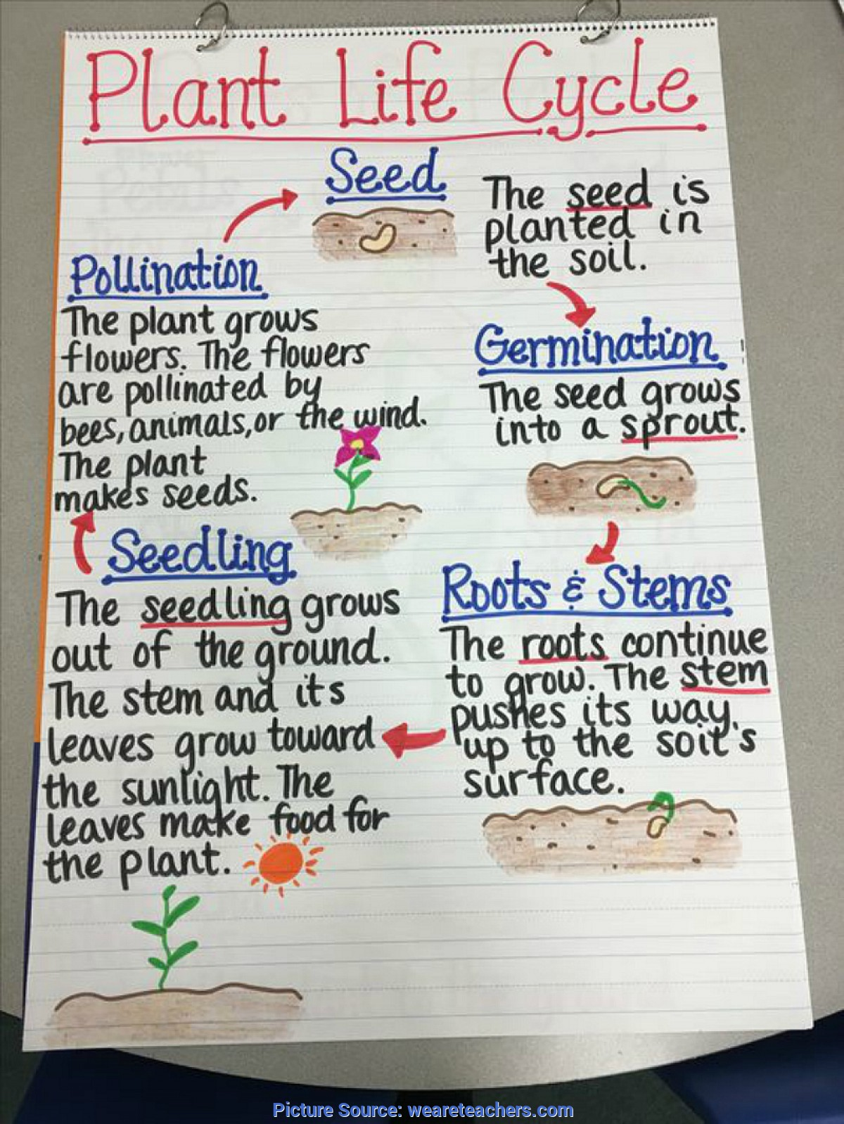 Fresh 3rd Grade Science Lesson Plans Plant Life Cycle 13