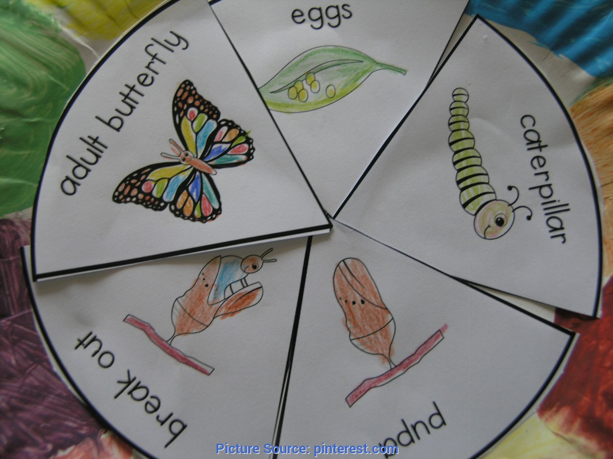 Trending Preschool Lesson Plans Life Cycle Of A Butterfly