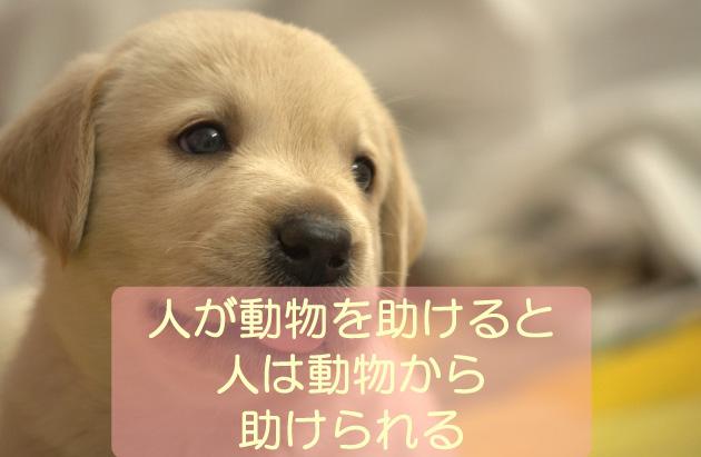 人が動物を助けると人は動物から助けられる