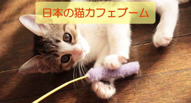 日本の猫カフェブーム