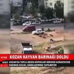 TOPLU GEZEN KÖPEKLER HERKESİ KORKUTUYOR