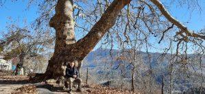 Çobancık Yaylası'nda asırlık çınar ağacı, tescillenerek anıt ağaç olarak koruma altına alınmayı bekliyor.