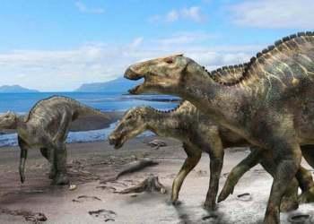 Bất ngờ khi phát hiện loài khủng long mới ở Nhật Bản