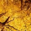 知ってましたか?針葉樹には常緑と落葉のタイプがあるってこと