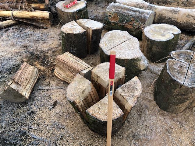 【原木購入】カシ玉を回収腰がいたい・・手がいたい・・・