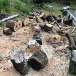 【原木を切る】土場の木を切る②
