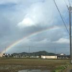 久々に濃い虹を見た。最近虹、見てますか?