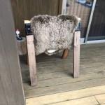 温かくなってきたので、ロッキングチェアの背もたれにあった羊の毛布を虫干しする。