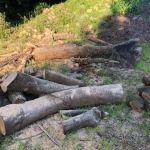 山師の土場の木材がまだ片付かない件