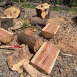 【暑い】原木切り作業再開