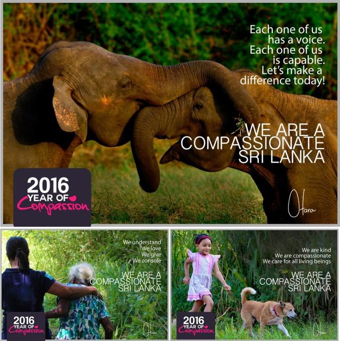 Compassion Collage