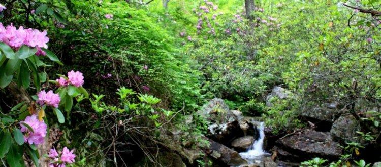Sweet Home Alabama Desots State Park