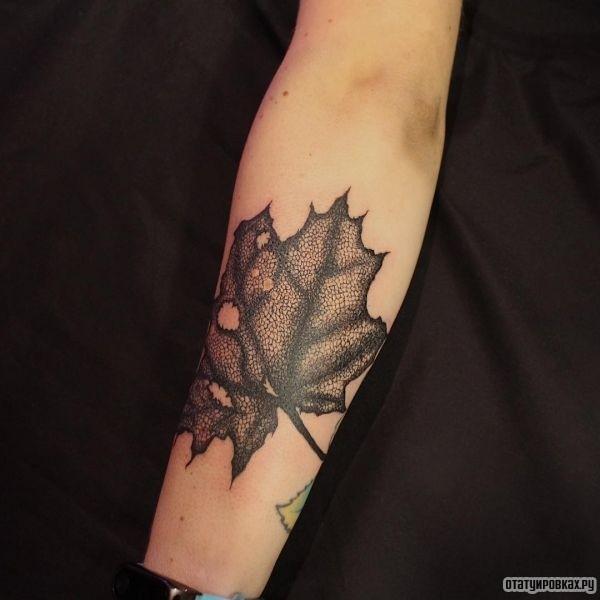 Тату клен: фото татуировки, эскизы, значение мужских и ...