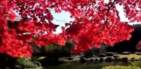 新宿御苑の日本庭園の紅葉