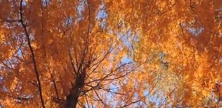 新宿御苑の紅葉時期