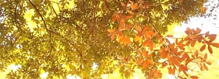 新宿御苑の紅葉の混雑状況