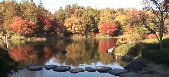 昭和記念公園 紅葉 時期
